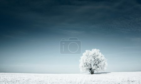 Frozen tree covered with snow